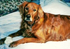 My puppy mill puppy, Abigail, I had her since she was five weeks old.