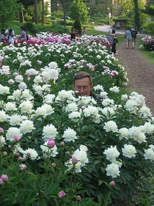Peek-a-Boo in the Peonies (there's my husband)