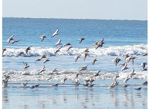 Birdwatching at Seabrook Island