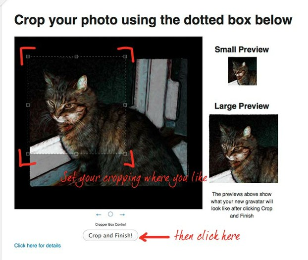 Cropping a cat image