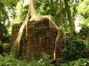Jungle ruins at Banteay Chhmar