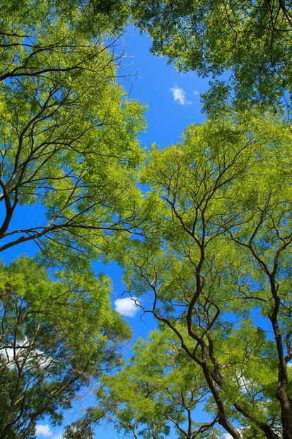 background-blue-branch-canopy-2837/