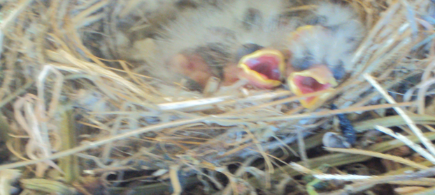 Our Baby Birds! We use these guys for speech practice!