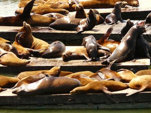 http://pixabay.com/en/crawl-seal-colony-seal-sea-lion-4910/
