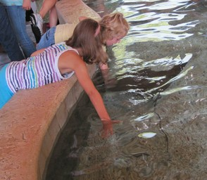 Petting the Stingrays