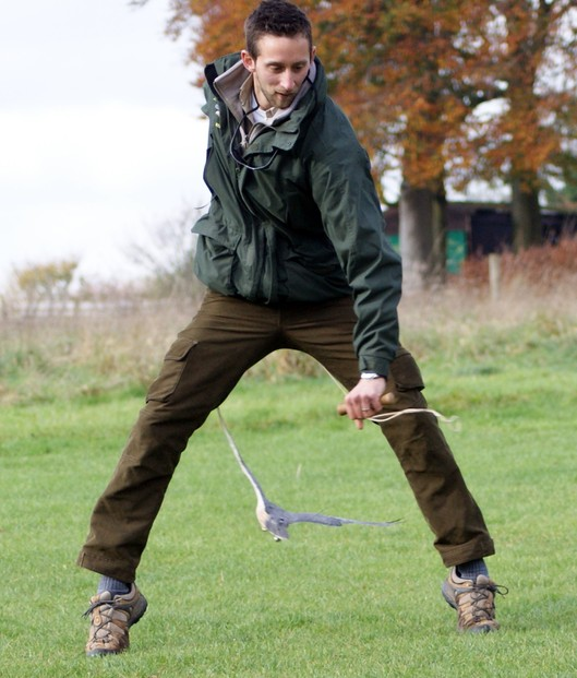 Action at the Hawk Conservancy as the Sony A390 catches a hawk flying between the handlers legs at full speed