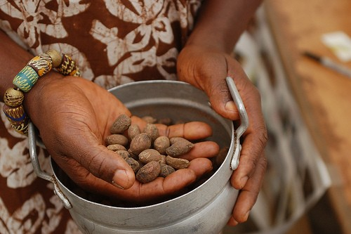 Shea Nuts -- The Source of Shea Butter