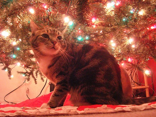 Kitty Hiding Under the Christmas Tree
