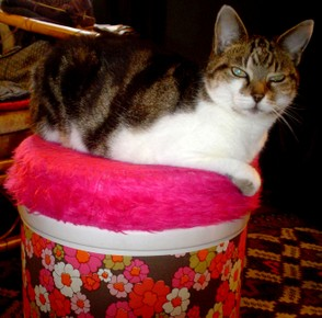 Cat on a pink 1970s pouffe