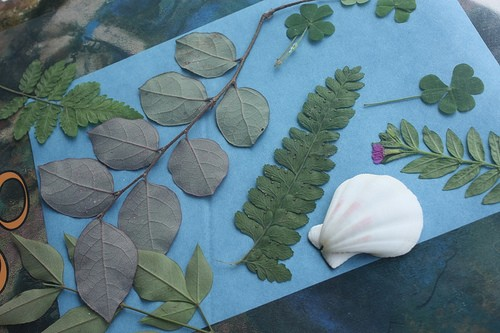 Create Nature Art With Photosensitive Paper
