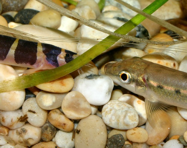 What Kind Of Fish Food Do Neon Tetras Eat