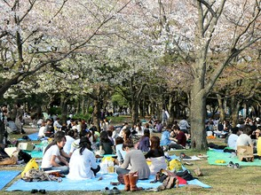 Hanami party in Yoyogi Park