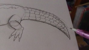 Draw in scales on the crocodile tail