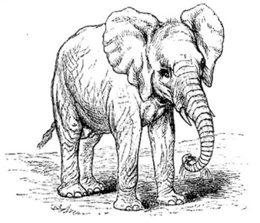 "The Encyclopaedia Britannica (9th Edition). This image of the African Elephant comes from the ""Elephant"" article."