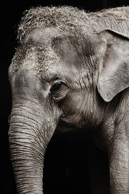 The Elephant here reminds me of what caffeine does to the body- dehydration, dried out neurotransmitters, tired,heavy feeling