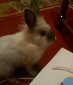 Bunnies As Pets: Gary the Bunny