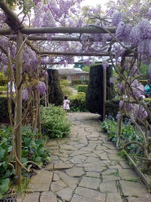 A Wisteria Arbor in London