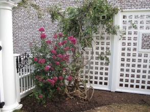 A Trellis Supporting Roses