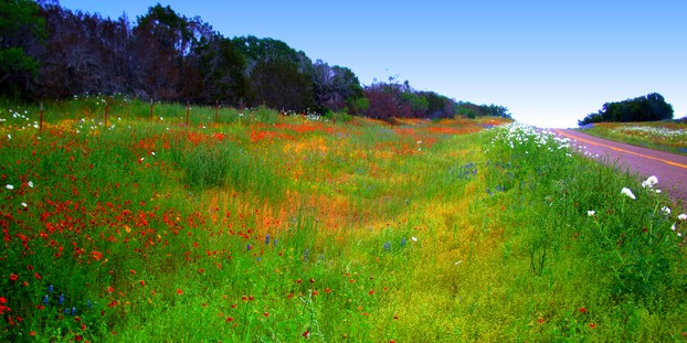 Roadside with wildflowers near Fredericksburg, Texas