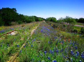 Various wildflowers of Texas