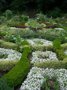 Beautiful Mulit-Colored Foliage Knot Garden