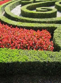 Beautiful Knot Garden