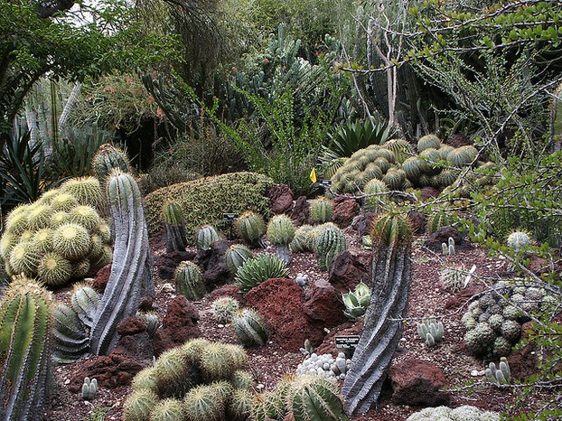 Desert Garden in Huntington Botanical Gardens in Los Angeles, California