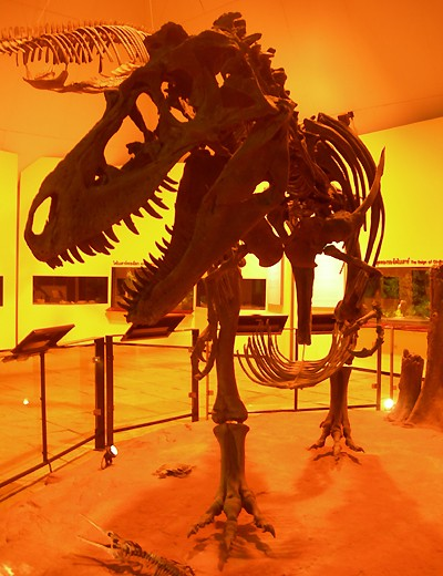 Cast of Carnivorous Dinosaur Skeleton