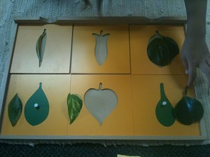 Classroom Material Leaf Shapes