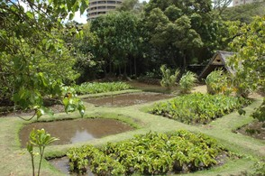 Hawaiian Natural Garden