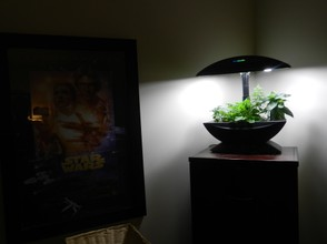 Aerogarden lighting up a dark corner