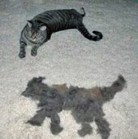 Meow, here is second me, all made out of fur - my fur, meow!