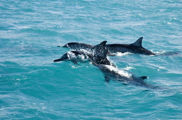 Dolphins can almost always better be seen from the boat than in the water 'swimming' with them