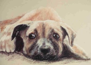 Catcher greyhound pup - pastel