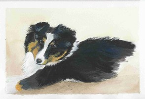 Calamity Jane - Sheltie - Watercolor