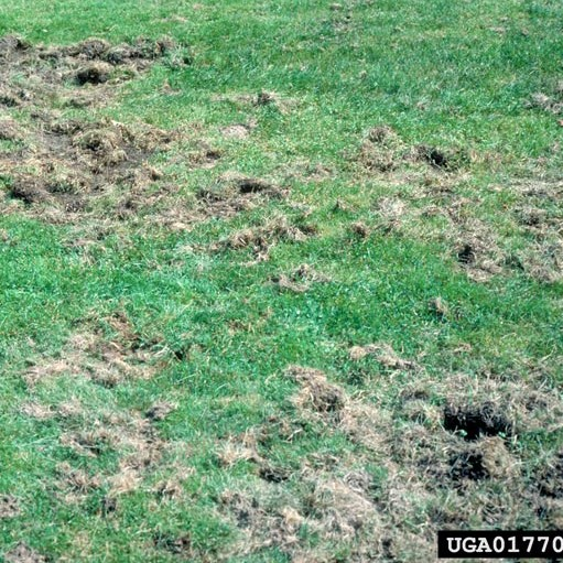 How To Get Rid Of Grubs In Your Lawn