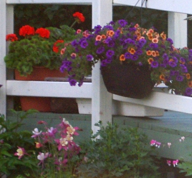 Decorate A Railing - Columbine, Million Bells, and  Bachelor Buttons