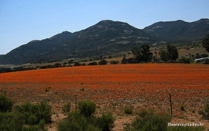 Namaqualand Colours
