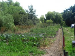 My Vegetable Allotment