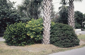 Florida Native Landscaping