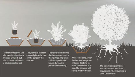 evolution of tree
