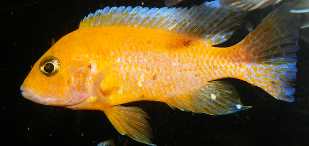How To Set Up Your New Aquarium Schooling Community Fish Tank
