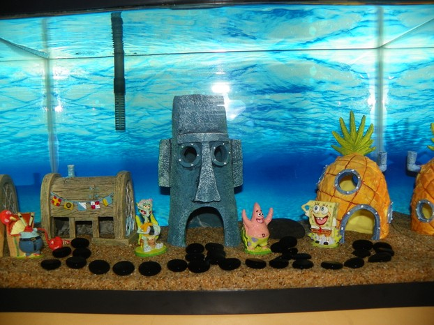How to set up your new aquarium schooling community fish tank for Spongebob fish tank