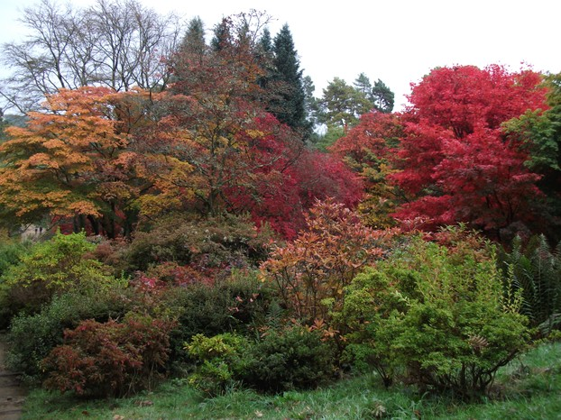 Autumn at the Winkworth Arboretum