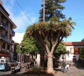 La Laguna where the university in Tenerife is