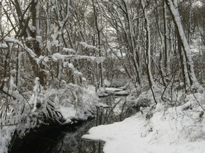 Temperate Forest in Winter, Delaware