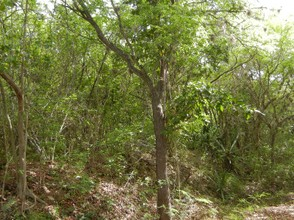 Tropical Dry Forest, Guanica, Puerto Rico