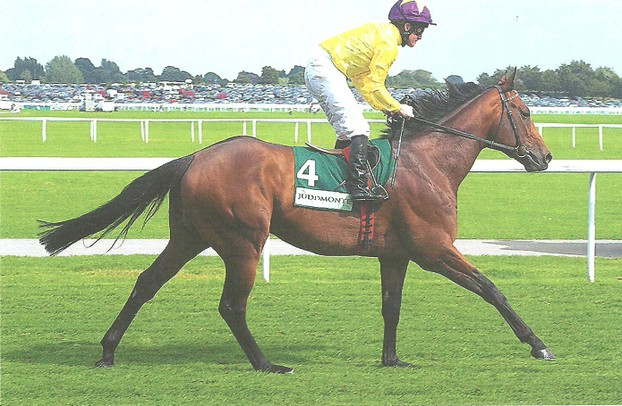 English Thoroughbred Sea The Stars strides out at York