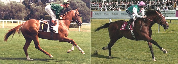 Blushing Groom, great-grandson of Mumtaz Begum; Frankel, inbred 3x to Natalma