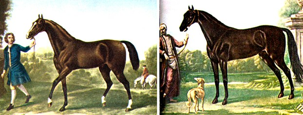 The Darley Arabian (left), born 1700, and the Byerly Turk, born ca. 1680